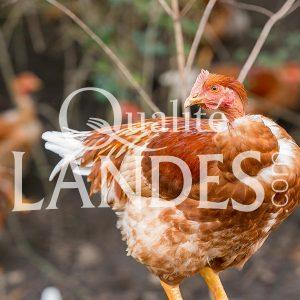 Chapons Fermiers des Landes IGP - Label Rouge