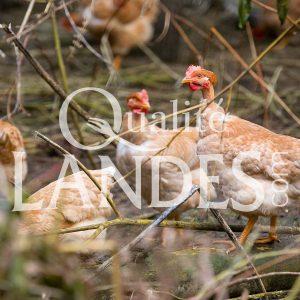 Poulardes Fermières des Landes IGP - Label Rouge